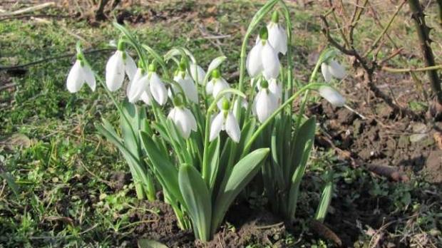 PROGNOZA METEO. ANM anunţă vreme caldă şi în februarie. Posibile precipitaţii slabe la final de ianuarie