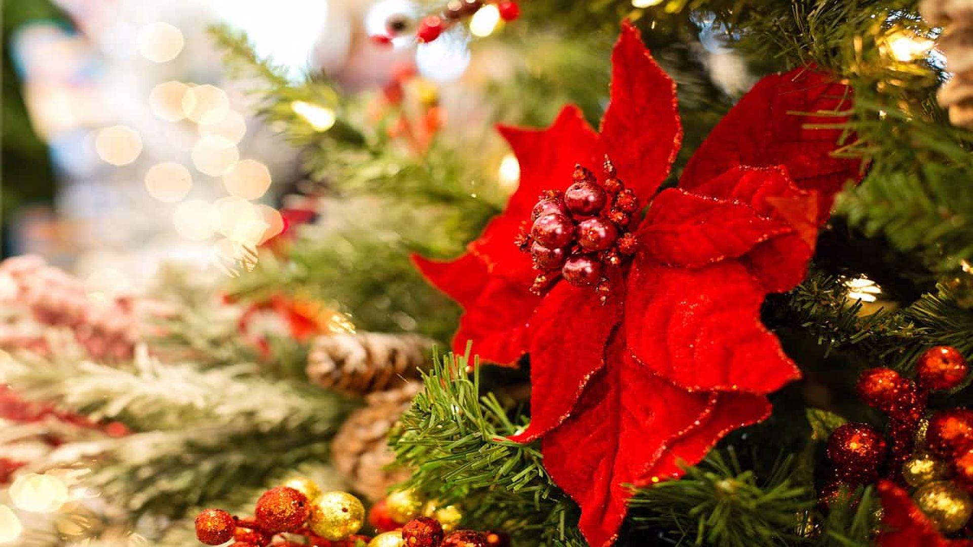 23 decembrie, TRADIŢII în ajunul Ajunului