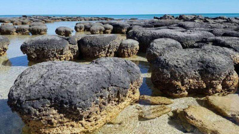 Începuturile planetei. Stromatoliții, cele mai vechi forme de viață de pe Pământ