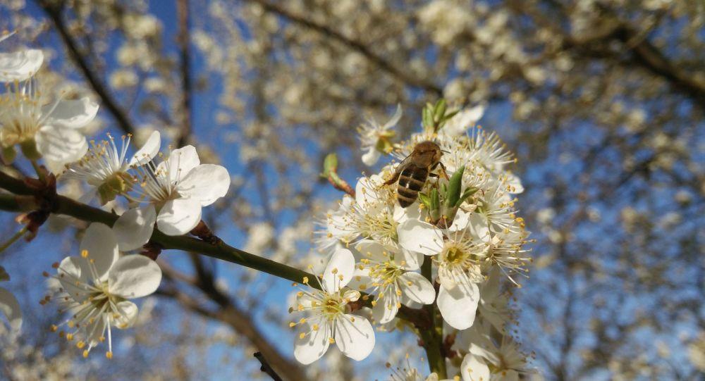 1 aprilie vine cu miros de primăvară. Ce spun specialiștii ANM