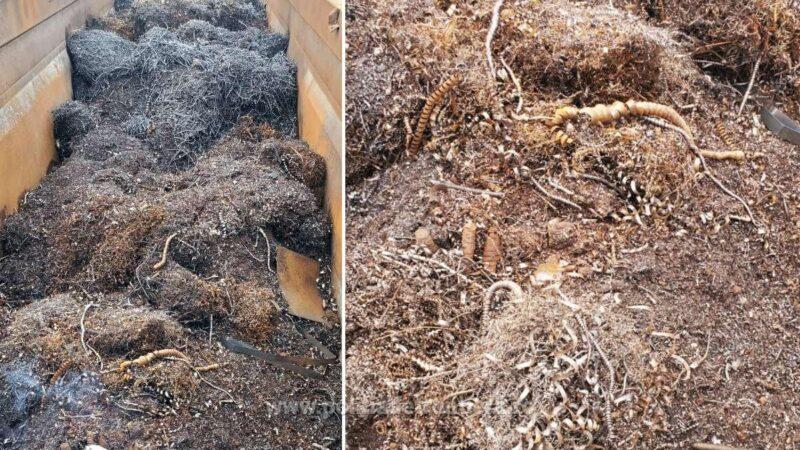 Peste 22 de tone deșeuri metalice, oprite la P.T.F. Giurgiu