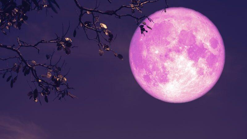 Fenomen astronomic inedit –  Super Luna Roz, a doua cea mai mare Lună Plină din 2021, va avea loc luni, 26 aprilie, potrivit NASA