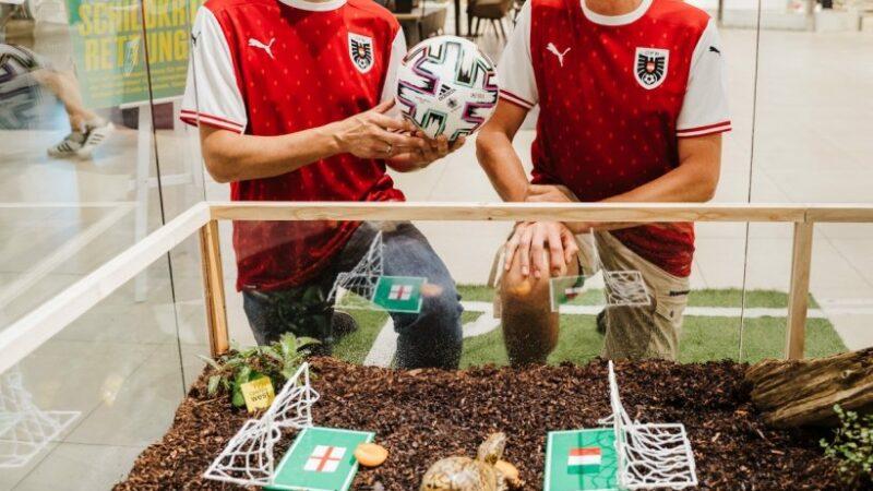 EURO 2020. Cine va câștiga finala: Anglia sau Italia? Ţestoasa Sigmund a dat pronosticul