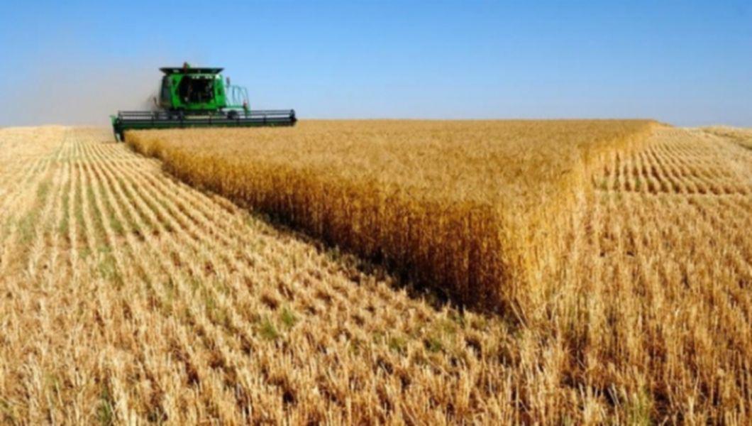 """România are o producție de grâu de 7 ori mai mare decât pe vremea cand era numită """"grânarul Europei"""""""